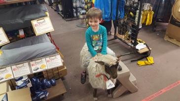 Ride-em', uh... sheep boy?